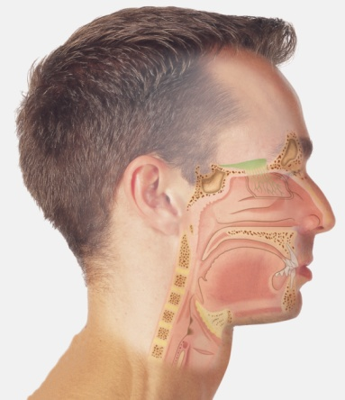 Diagram of nasal passages overlaid on a human head.